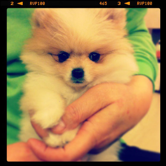 SNSD Yuri cute puppy selca
