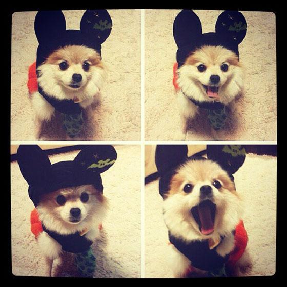 SNSD Yuri puppy Instagram picture