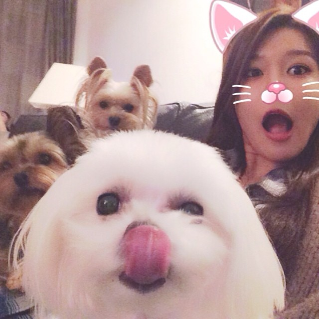 SNSD Sooyoung Instagram puppies family