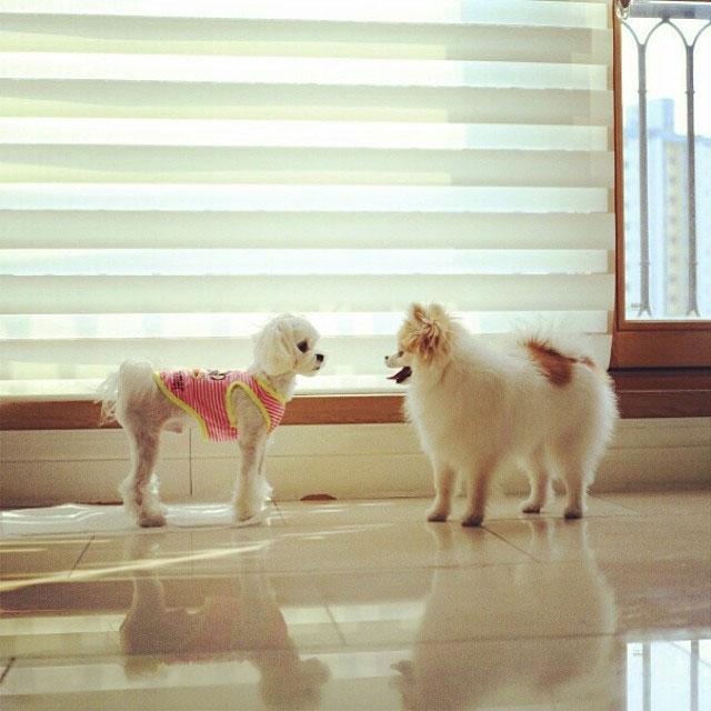 SNSD Taeyeon Instagram puppies date