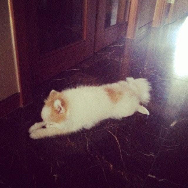 SNSD Yuri Instagram puppy Hani