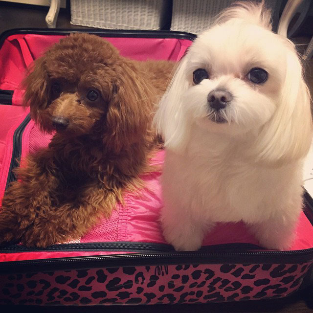 SNSD Sooyoung Instagram cute puppies